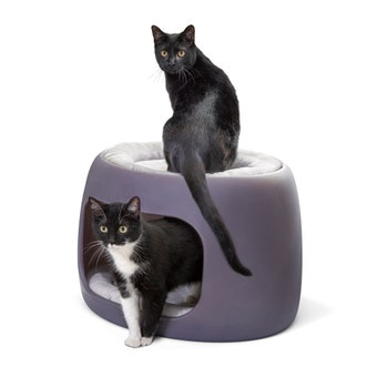597499 Furry Friends Bunk Bed For Cats And Dogs 001
